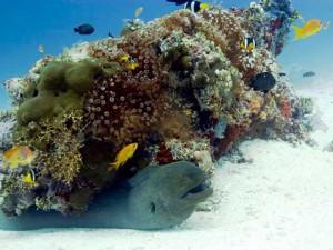 Экзотические обитатели океанических глубин Мальдивских островов