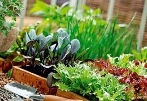Как вырастить вкусную зелень на подоконнике?