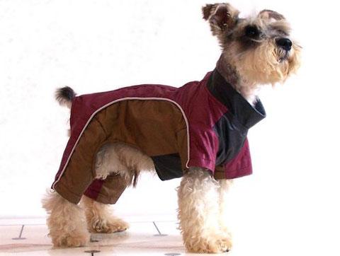 гулять с собакой зимой