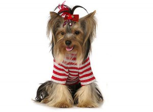 Красивая и практичная одежда для собак - не только дань моде, но и необходимость.