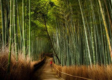 из бамбука